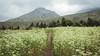 Flores de la montaña (Marthaqr) Tags: outdoor chile yerba loca green fresh cloud
