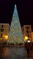 L'Albero (The Tree) (Mr. Bamboocha) Tags: 2017 alberodinatale christmas christmastree italia italy lalbero lucidartista lucidartista2017 natale piazzaportanova salerno thetree it