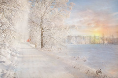 Winter landscpae. (Birgitta Sjostedt) Tags: winter snow tree road forest track ice sky blue house sweden texture textured paint painted dirt grunge coth5