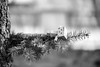 *** Adventure with Danbo *** (*** Joe Wild ***) Tags: ダンボー amazonダンボー ぬい撮り ダンボー写真部 danbo danboard danboardmini danboandfriends danbophotography instadanbo danbogram toyphotography にゃんぼー nyanbo nyanboard nyano icujapan lovesnippon bestjapanpics toy 阿愣 紙箱人 ミニチュア miniature miniaturefood デコレ コンコンブル concombre ファインダー越しの私の世界 decole
