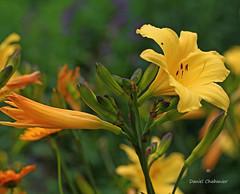 Couleurs de la nature . (PACHA23) Tags: valdeloire couleur flor flower lys