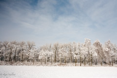 Stolbtsy (Kathlyn.s) Tags: distagont2828 carlzeiss canoneos5d canon belarus trees winter snow sky