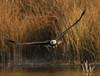 Such Intensity (Beth Sargent) Tags: baldeagle birdofprey raptor bird hunter lake nature wildlife explore