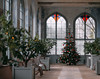 Orangery (V Photography and Art) Tags: orangery christmastree oranges windows stainedglass stainedglasswindows periodfeatures building structure architecture texture oldbuilding orangetrees bench knole knolepark sevenoakes