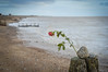 found... (Emma Varley) Tags: rose beach winter sussex lost found sea sand stones groyne red