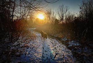 Sunset Bird in Winter