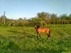Одинокая лошадь в редкой деревне.