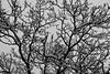 Arbre qui a froid (zuhmha) Tags: bulgarie bulgaria winter hiver mogilovo tree sky neige snow silhouette line lignes courbes curve geometry géométrie arbre ciel
