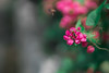Where are you heading? (Pintohedfang) Tags: wildflower flower natur plant pink macro sunrise sony 攝影發燒友
