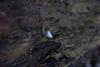 """die feder am strand (torsten hansen (berlin)) Tags: torsten hansen berlin wwwdiehansensde wwwtorstenhansenfotografiede """"wwwtorstenhansende"""" licht light malerei painting malen paint lichtmalerei lightpainting """"wwwlightpaintingberlinde"""" """"wwwtorstenhansenschmuckdesignde"""""""