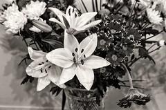 Winter flowers (sasastro) Tags: mono pentaxk5iis smcpentaxm50mmf17