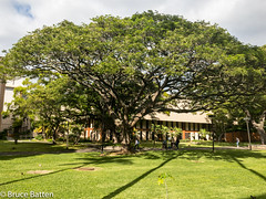 171207 Honolulu-03.jpg (Bruce Batten) Tags: usa plants subjects campuses buildings vertebrates hawaii trees locations trips occasions animals birds uh shadows businessresearchtrips honolulu unitedstates us hamiltonlibrary uhm people