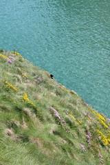 IMG_3794 (avsfan1321) Tags: ireland northernireland unitedkingdom uk countyantrim ballycastle carrickarede carrickarederopebridge nationaltrust landscape green blue ocean atlanticocean