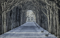 Winter alley in the park (Dmitriy'Os'Ivanov) Tags: pentaxk5 pentaxda300mmf4 hdr winter park alley ominous dark desert landscape saintpetersburg branches trees forest road path