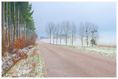 Fraîcheur matinale (Pascale_seg) Tags: landscape paysage moselle lorraine france countryside campagne forêt forest country matin aube aurore brume mist misty brumeux ciel sky rose pink bleu blue tree champ field route street