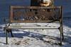 PC313685 (Paul Henegan) Tags: bench shadows snow 32crop hbm