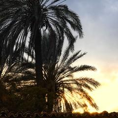 My town (4) (Polis Poliviou) Tags: nicosia lefkosia ledra street capital centre life live polispoliviou polis poliviou πολυσ πολυβιου cyprus cyprustheallyearroundisland cyprusinyourheart yearroundisland zypern republicofcyprus κύπροσ cipro кипър chypre chipir chipre кіпр kipras ciprus cypr кипар cypern kypr ©polispoliviou2017 oldcity europe building streetphotography urbanphotography urban heritage people mediterranean roads morning architecture buildings 2017 city town travel leaf leaves water winter christmas xmas christmasspirit christmasornaments nature