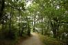 al fondo la ria (vitofonte) Tags: camino track path senda bosque forest arbol tree ribadeo galicia naturaleza nature natura natureza vitofonte