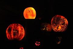 IMG_6562 (comtrag) Tags: jackolanterns rogerwilliamszoo rhodeisland halloween pumpkins pumpkincarving