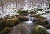 Hayedo de Argovejo. (ISA ORPI) Tags: hayedo leon picosdeeuropa naturaleza rio agua bosque nieve invierno paisaje landscape hojas