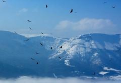 Supervivencia..!!  Survival..!! (Olynbe) Tags: montañas buhitres nieve nieblas vuelo basquecountry mendiak orduña olynbe pentax delica blue azul
