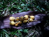 Picnic on grass with plums (*Maria L) Tags: plums garden grass fruits picnic délicesdelanature 7dwf
