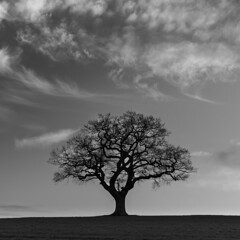 Silhouetted (Steve Millward) Tags: nikon nikkor d750 2470 fx fullframe leefilters lee09hardndgrad manfrotto stevemillward perspective composition interesting blackandwhite light texture tone mood moment winter sky cloud cloudy nature landscape scenic beautiful drama dramatic outdoor outside england derby midlands eastmidlands melbourne afternoon tree lonetree field square squarecrop