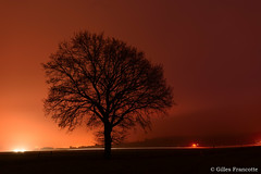 Night shot (gillesfrancotte) Tags: 2017 december décembre outdoor piromboeuf campagne countryside extérieur field filé fog grass grassland headlight landscape landschap light longexposure mist nature night outside paysage phare plaine trail tree winter aywaille wallonie belgique be orange sky silhouette