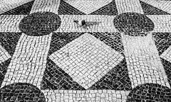 PP - Paloma Portuguesa - Portuguese Pigeon (Walimai.photo) Tags: black white blanco negro byn bw branco preto blanc noir suelo floor cascais portugal tiles pigeon paloma street lx5 panasonic lumix
