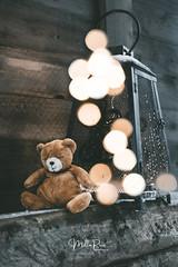 Good night, teddy (mirri_inc) Tags:
