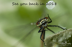 Goodbye 2017 (gelein.zaamslag) Tags: happynewyear happyholidays 2018 macro macro105mm macrophotography nikon geleinjansen flickrfriends insects yourbestshot2017 ybs2017 naturaleza fun natura bestwishes
