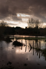 after the rains (marthelelièvre) Tags: inondation crue sienne normandie france reflets paysage