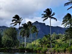 Wailua River State Park - Fern Grotto (40) (pensivelaw1) Tags: hawaii kauai wailuariverstatepark ferngrotto