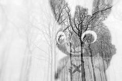Mad World (Dikke Biggie.) Tags: macro closeup detail doubleexposure canon canoneos450d 100mm f28 blackandwhite bw black white zwartwit zw zwart wit monochrome monochroom rabbit konijn toy toys speelgoed dof depthoffield scherptediepte dgawc canonnl canong1xmarkii trees boom bomen snow sneeuw landscape landschap