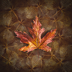Vegetal web (Ro Cafe) Tags: mm macromonday dobleexposure macro wilted dried photoshop photomanipulation nikkormicro105f28 nikond600 leaf leaves