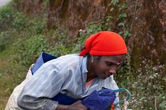 с1_20150101-_DSC3635 (Mivr) Tags: india kerala plantation tea
