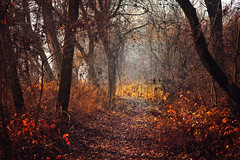 Frosty morning (Pásztor András) Tags: nature forest landscape leafs autumn november path mood calmness sky blue red trees colrd sunlight dslr nikon d700 hungary andras pasztor photography 2017