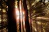 CONTRALUZ (juan luis olaeta) Tags: contraluz natura canon photoshop lightroom topaz rayos sol amanecer
