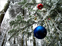 deep in the forest (Bernergieu) Tags: christmas forest blue red trees winter snow inexplore árboles selva navidad bola boladenavidad