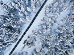 Winter von oben (Marcel Cavelti) Tags: winter dji mavic pro flight grisons switzerland bonaduz cold snow forest trees landscape road