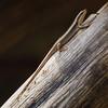Upwards (AnyMotion) Tags: montanespeckledskink trachylepispunctatissima reptile reptil lizard echse wood holz animal tier animals tiere 2015 anymotion arumeruriverlodge tanzania tansania africa afrika travel reisen wildlife nature natur 7d2 canoneos7dmarkii nahaufnahme square diagonal 1600x1600 ngc
