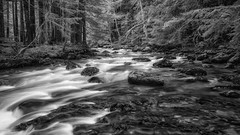 Beauty in B&W (Matthew James Lewis) Tags: water washingtonstate rocks olympicpeninsula olympicnationalforest dungenessriver trees firtrees blackandwhite