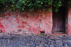(Mauricio Fuentes Mariangel) Tags: calledelossuspiros uruguay colonia cat