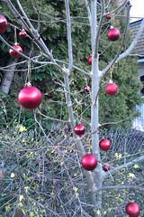 December 28th, 2017 Christmas decorations on a tree (karenblakeman) Tags: caversham uk december 2017 2017pad decorations christmas tree red baubles reading berkshire smileonsaturday redrules