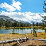 Ellery Lake, Yosemite NP 10-17 thumbnail