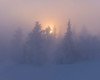 Idre IV (Gustaf_E) Tags: berg fjäll forest gran idre kväll landscape landskap skog snow snö spruce sverige sweden vinter winter woods