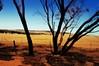 We Need Rain. Christmas In Western Australia (Electric Soup) Tags: outback oz wa westernaustralia parched arid drought desert rainfree wheatbelt bluedogsiesta tonywilkinson meatismurder