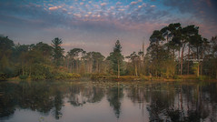 The forest's skyline (Ingeborg Ruyken) Tags: dropbox autumn zonsopkomst sunrise dawn oisterwijksevennen fall flickr herfst ochtend trees rayoflight 2017 bomen oktober 500pxs natuurfotografie fog morning october mist