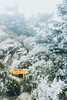 _MG_3758 (waychen_C) Tags: nantou renai renaitownship hehuanshan hehuanmountain wuling snow 南投 仁愛 仁愛鄉 合歡山 武嶺 tarokonationalpark 台14甲 fog mist