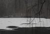 winter is escape VII (Mindaugas Buivydas) Tags: lietuva lithuania color winter december forest tree trees birch snow newyearseve sadnature mood moody dark darkness darkforest darkside ice lake balsis verkiųregioninisparkas verkiairegionalpark mindaugasbuivydas